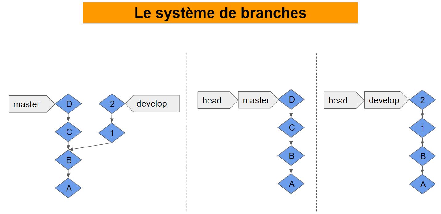 bases des branches